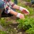 Mit Empas das Unkraut auf umweltfreundliche Weise nachhaltig und langfristig beseitigen