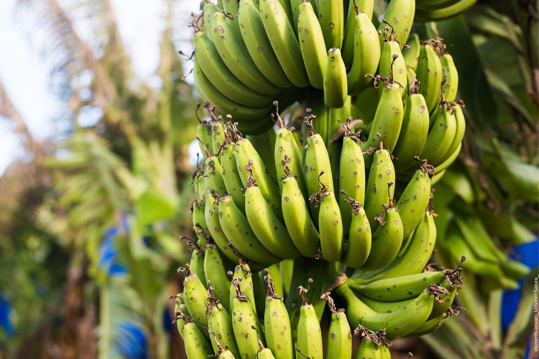 Fairtrade Siegel und dessen Bedeutung